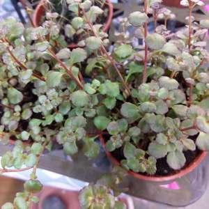 這是什麼植物