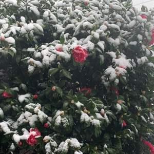 前几天下雪了❄️❄️